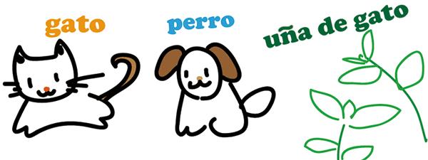 スペイン語 単語 猫 犬