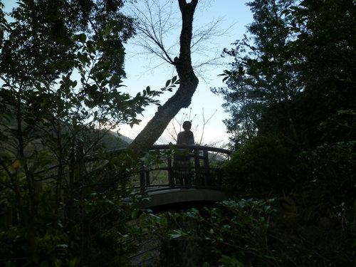 箱根 森 散歩