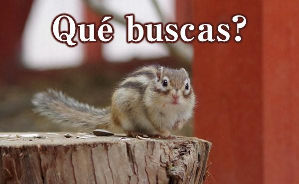 スペイン語で何探してる