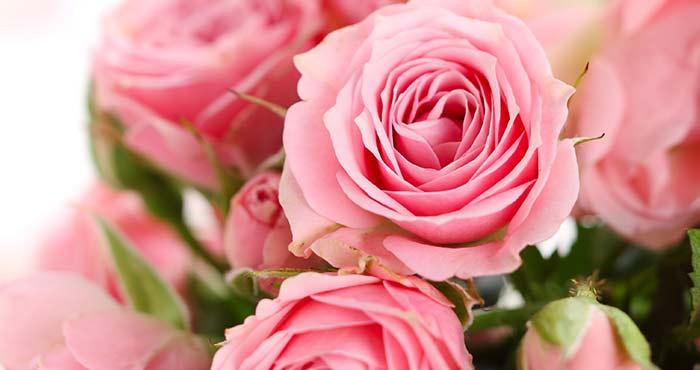 薔薇のスペイン語 rosa
